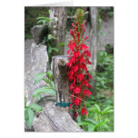 Notes from Nature---Sharing the Beauty Stationery Note Card