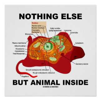 Nothing Else But Animal Inside Eukaryotic Cell Poster