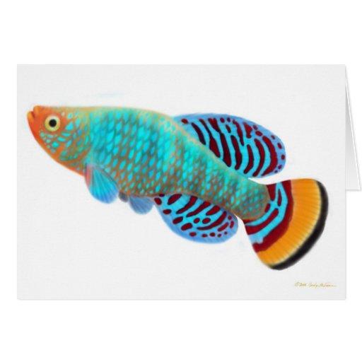 Nothobranchius Rachovii Killifish Card