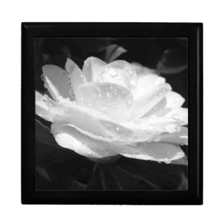 Nourished Camellia Gift Box