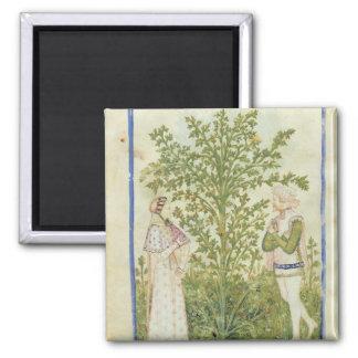 Nouv Acq Lat Celery, from 'Tacuinum Sanitatis' Magnet