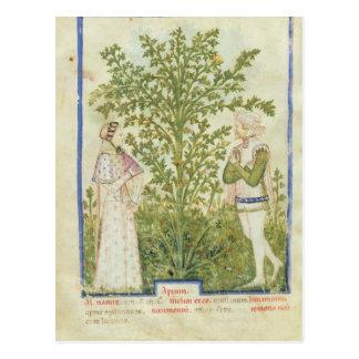 Nouv Acq Lat Celery, from 'Tacuinum Sanitatis' Postcard