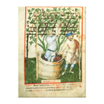 Nouv Acq Lat Gathering and pressing grapes Stretched Canvas Prints
