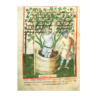 Nouv Acq Lat Gathering and pressing grapes Canvas Print