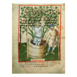 Nouv Acq Lat Gathering and pressing grapes Posters