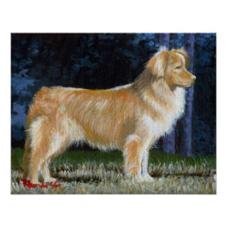 Nova Scotia Duck Tolling Retriever Dog Portrait Poster