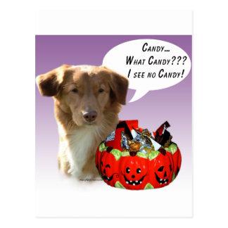 Nova Scotia Duck Tolling Retriever Halloween Candy Postcard