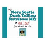 Nova Scotia Duck Tolling Retriever Mix is All That Postcard