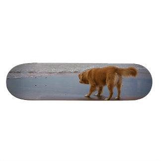 Nova Scotia Duck Tolling Retriever Ocean Cautious Custom Skate Board