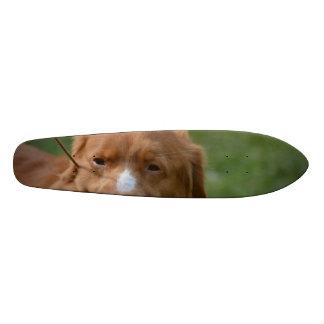 Nova Scotia Retriever Custom Skate Board