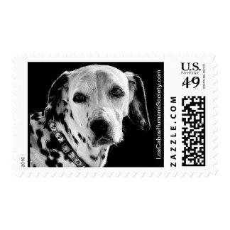 Nova the Dalmatian Postage Stamp