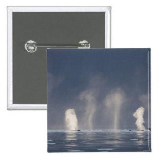 Novaeangliae del Megaptera de las ballenas jorobad Pin Cuadrada 5 Cm