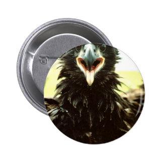 Novato de Eagle calvo Pin