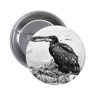 Novato Eagle calvo en jerarquía Pin