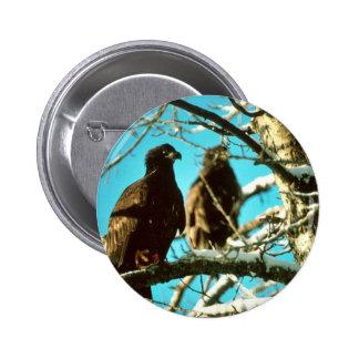Novatos de Eagle calvo Pin