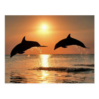 Novel TIC dolphins Postcard