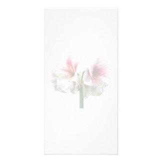 Novela corta del Amaryllis Plantilla Para Tarjeta De Foto