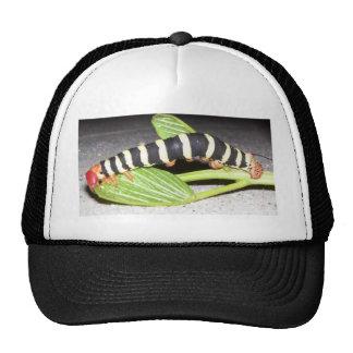 Novela de suspense de Caterpillar Gorros