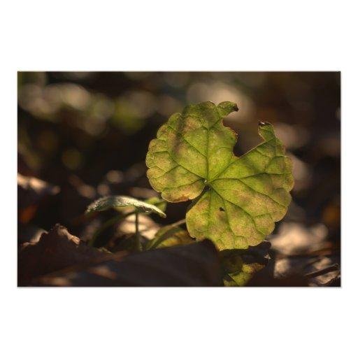November Sun CC0305 Photo Print