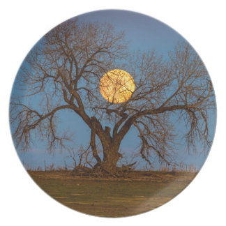 November Supermoon Tree Melamine Plate