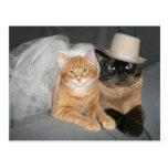 Novia y novio del gatito postal