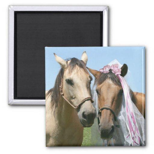 Novia y novio equinos iman