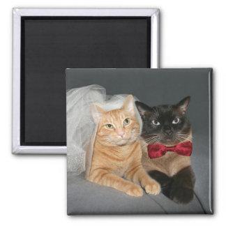 Novia y novio felinos imán cuadrado