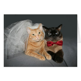 Novia y novio felinos tarjeta de felicitación