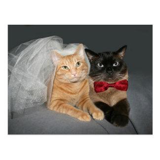 Novia y novio felinos postal