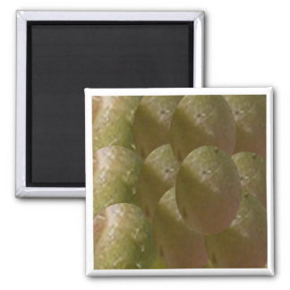 NOVINO Nature Bountiful - Enjoy n Share the Joy 2 Inch Square Magnet