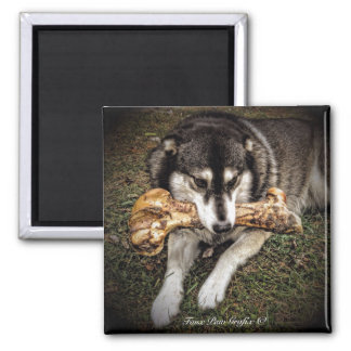 NOW Dinosaurs Extinct! 2 Inch Square Magnet
