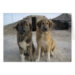 Nowzad Dogs Notecard
