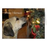 Nowzad Kilo Christmas Card