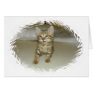 Nowzad Rescue Cat Notecard