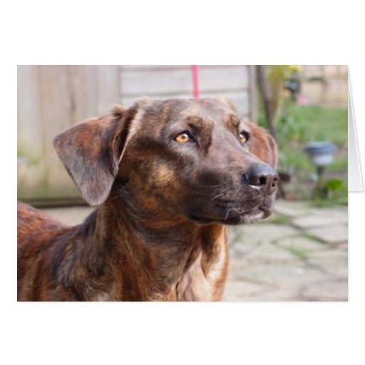 Nowzad Rescue Dog Brin Notecard Stationery Note Card