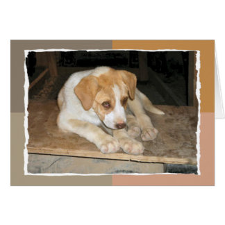 Nowzad Rescue Dog Notecard