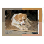 Nowzad Rescue Dog Notecard Greeting Card