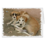 Nowzad Rescue Dogs Notecard Cards
