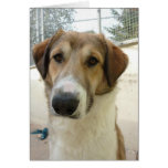 Nowzad Rescue Jack Notecard Card