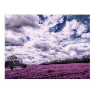Nubes sobre campos del caramelo tarjeta postal
