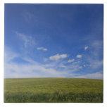 Nubes y césped, Toscana, Italia Azulejo Cuadrado Grande