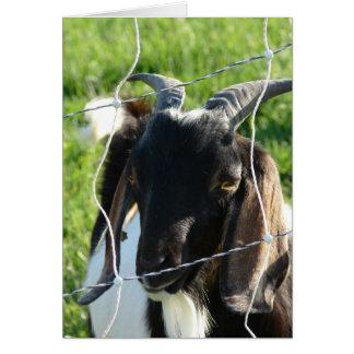 Nubian Billy Goat Card