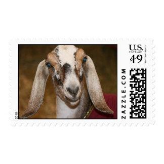 Nubian Dairy Goat Doe White Stripe Caprine Postage