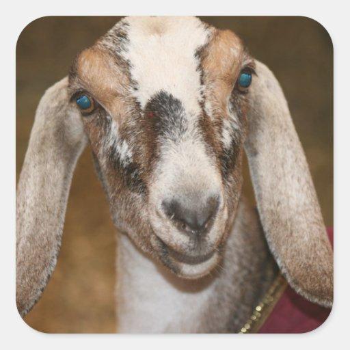 Nubian Dairy Goat Doe White Stripe Caprine Square Sticker