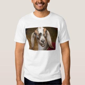 Nubian Dairy Goat Doe White Stripe Caprine T-Shirt