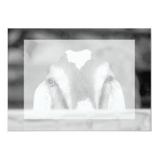 Nubian doe bw peeking over wooden rail.jpg card