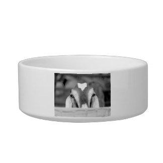 Nubian doe bw peeking over wooden rail.jpg pet food bowl