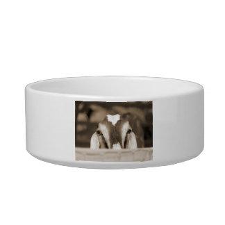 Nubian doe bw sepia peeking over wooden rail pet bowls