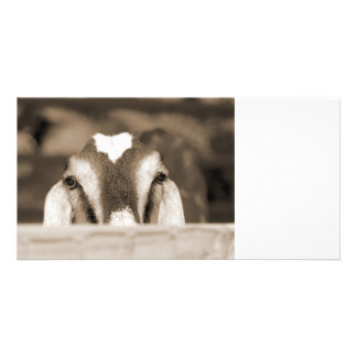 Nubian doe bw sepia peeking over wooden rail customized photo card