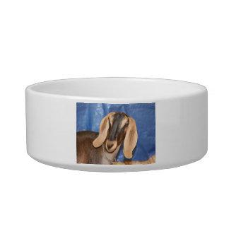 Nubian doe head against blue cat bowls